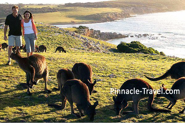 Australia Adelaide | Kangeroo Island | 4 Days 3 Nights Adelaide City Panda + Kangaroo Island Tour Australia Holiday Package from Singapore