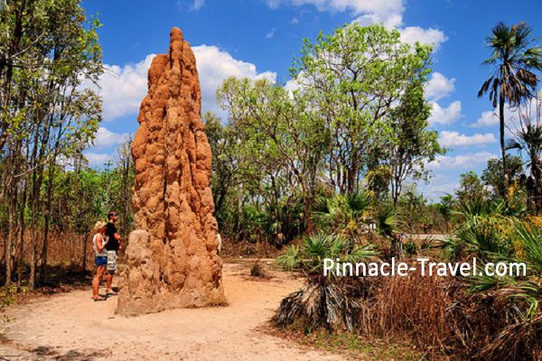 Australia Darwin | Litchfield National Park | 4 Days 3 Nights Darwin Wondrous Australia holiday package from Singapore