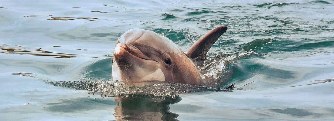 6 Days 5 Nights Gold Coast Tangalooma Dolphin, 2 Worlds + Farm Tour Australia holiday package from Singapore