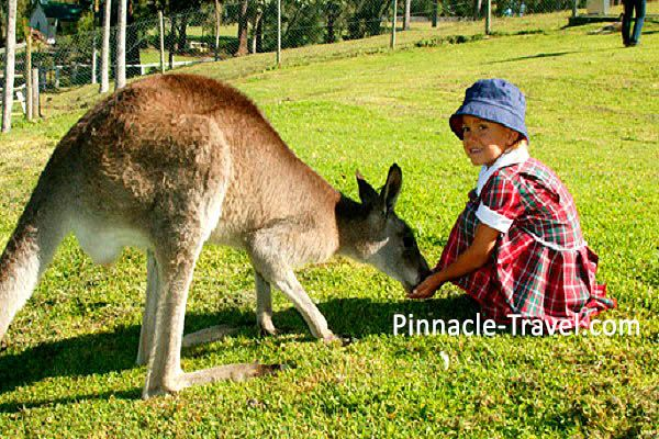 Australia Gold Coast | Paradise Country Farm Tour | 6 Days 5 Nights Gold Coast Best Discovery Tour Australia holiday package from Singapore