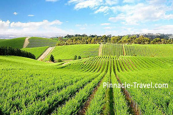 Australia Sydney | Hunter Valley | 4 Days 3 Nights Sydney Blue Mountains, Wildlife & Cruise + Hunter Valley Australia holiday package from Singapore