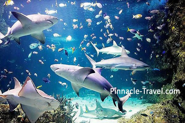 Australia Sydney | Sea Life Sydney Aquarium | 4 Days 3 Nights Sydney 3 Merlin Attractions Choices + Free & Easy Australia holiday package from Singapore
