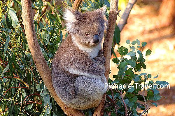 Australia Sydney | Wild Life Sydney Zoo | 4 Days 3 Nights Sydney 3 Merlin Attractions Choices + Free & Easy Australia holiday package from Singapore