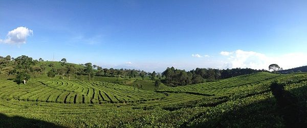 Tea Plantation Indonesia holiday tour package from Singapore