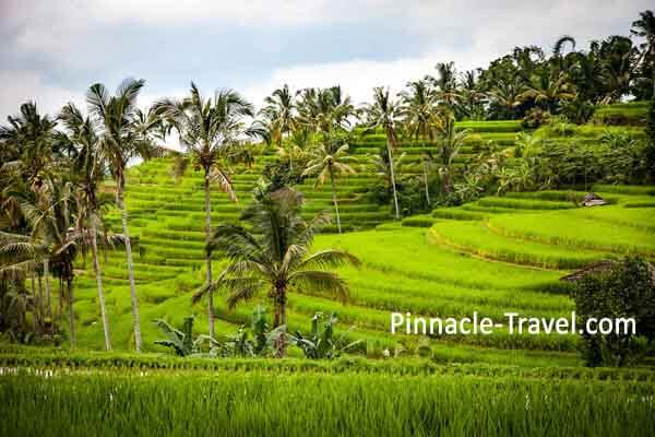 Indonesia Tegallalang Rice Paddy
